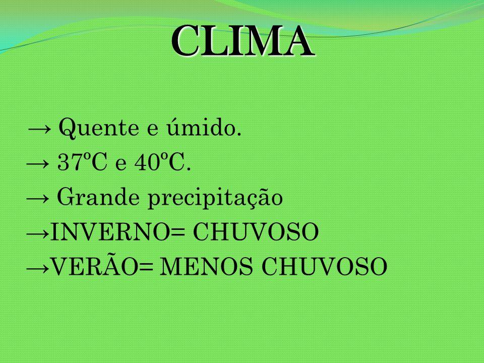 CLIMA Quente e úmido. 37ºC e 40ºC. Grande precipitação INVERNO= CHUVOSO VERÃO= MENOS CHUVOSO