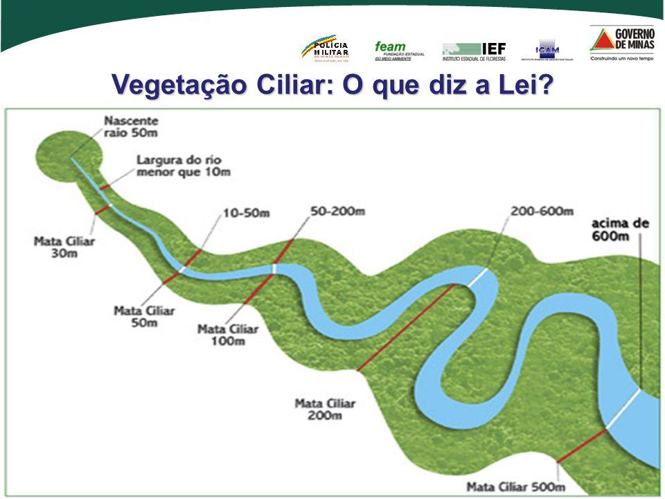 Vegetação Ciliar: O que diz a Lei?