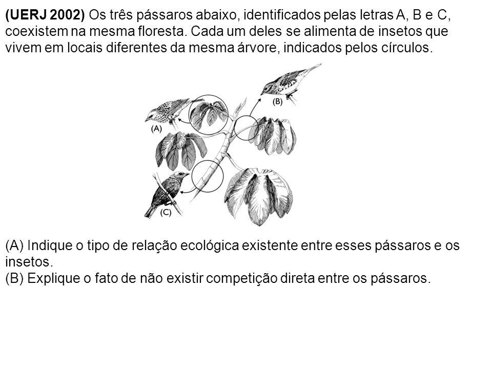 (UERJ 2002) Os três pássaros abaixo, identificados pelas letras A, B e C, coexistem na mesma floresta. Cada um deles se alimenta de insetos que vivem