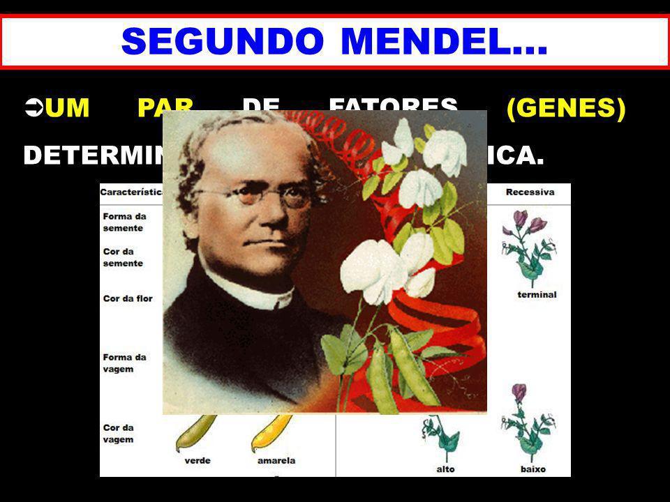 COR DOS OLHOS EFEITO CUMULATIVO 2 PARES DE GENES 4242 = 16