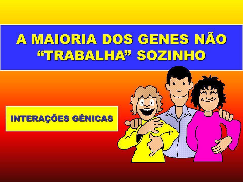 GenótiposFenótipos aabbpele clara Aabb, aaBbmulato claro AAbb, aaBB, AaBbmulato médio AABb, AaBBmulato escuro AABBpele negra 2 PARES DE GENES