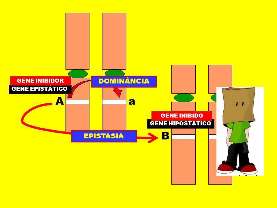 COR DOS OLHOS EFEITO CUMULATIVO 2 PARES DE GENES