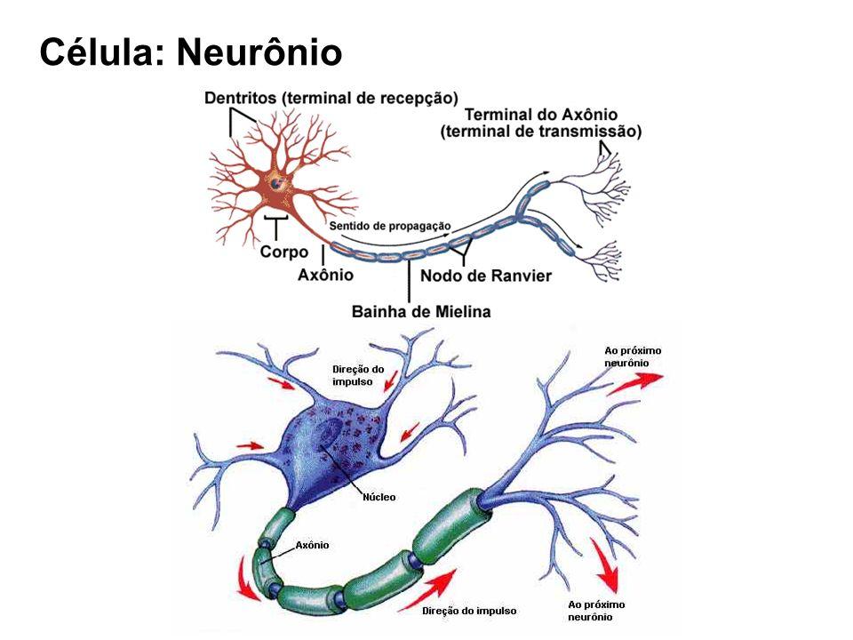 Célula: Neurônio