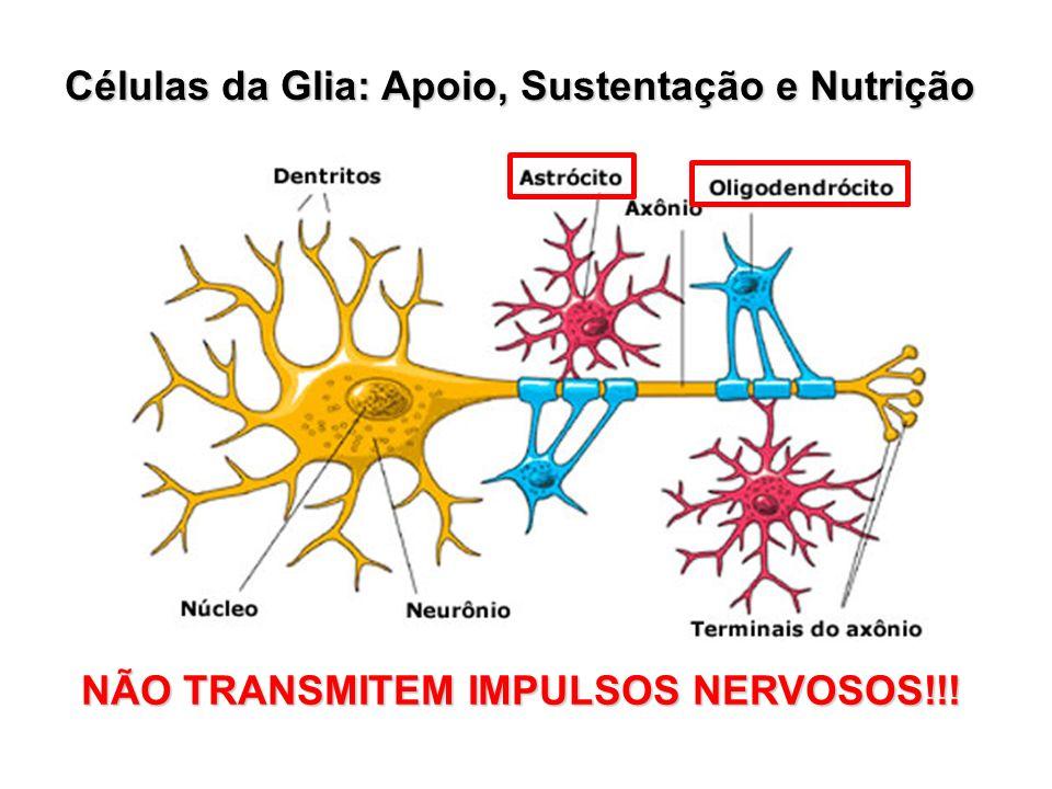 Células da Glia: Apoio, Sustentação e Nutrição NÃO TRANSMITEM IMPULSOS NERVOSOS!!!