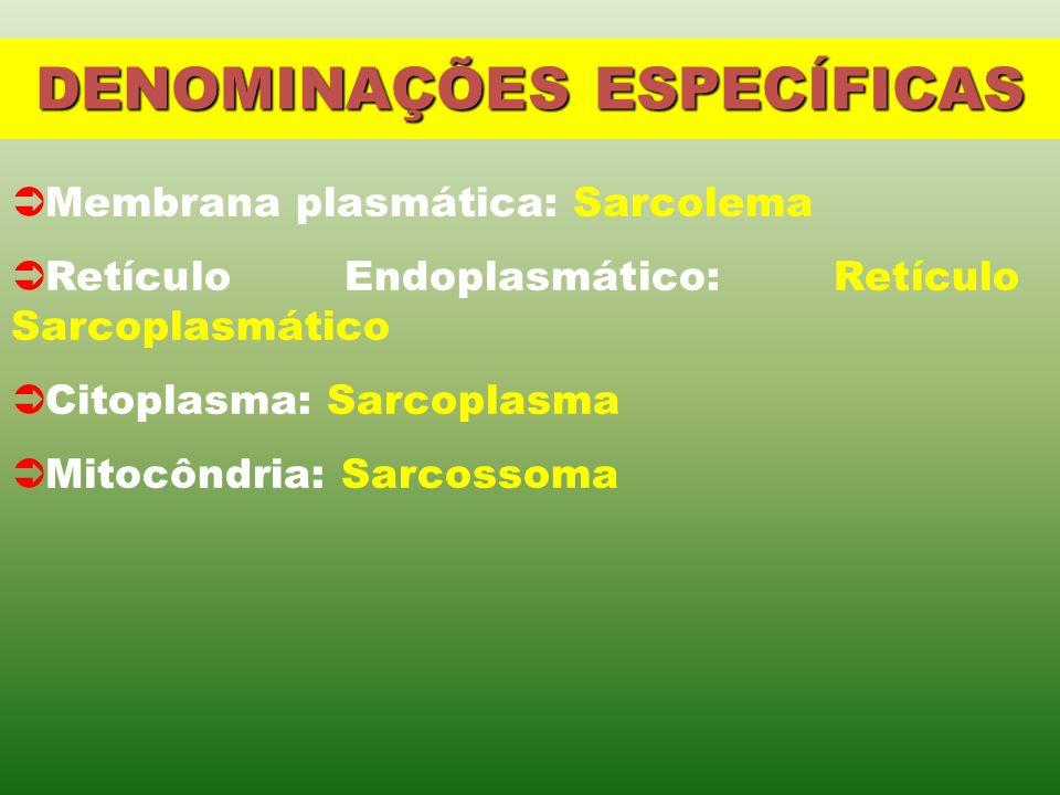 DENOMINAÇÕES ESPECÍFICAS Membrana plasmática: Sarcolema Retículo Endoplasmático: Retículo Sarcoplasmático Citoplasma: Sarcoplasma Mitocôndria: Sarcossoma