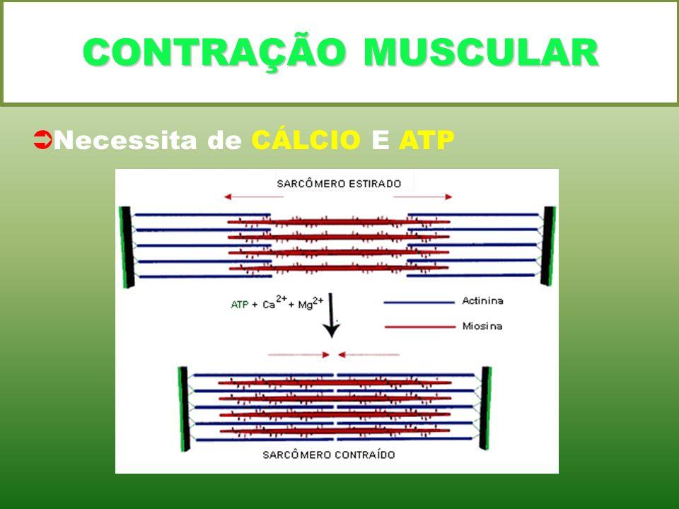 CONTRAÇÃO MUSCULAR Necessita de CÁLCIO E ATP