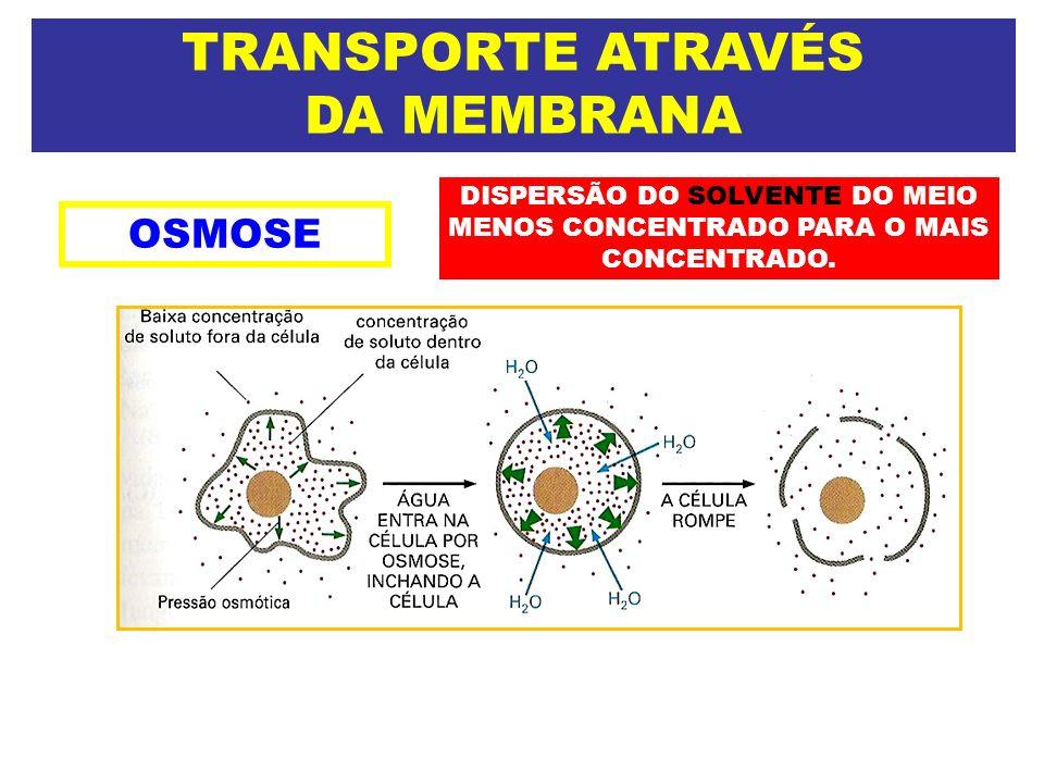 TRANSPORTE ATRAVÉS DA MEMBRANA OSMOSE DISPERSÃO DO SOLVENTE DO MEIO MENOS CONCENTRADO PARA O MAIS CONCENTRADO.