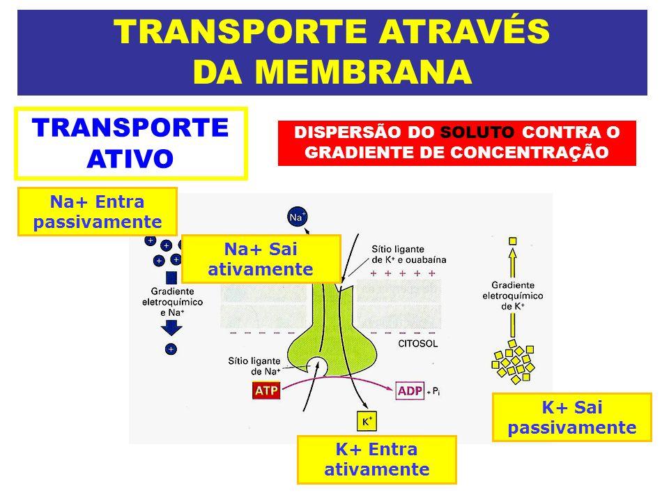 TRANSPORTE ATRAVÉS DA MEMBRANA TRANSPORTE ATIVO DISPERSÃO DO SOLUTO CONTRA O GRADIENTE DE CONCENTRAÇÃO Na+ Entra passivamente K+ Sai passivamente Na+