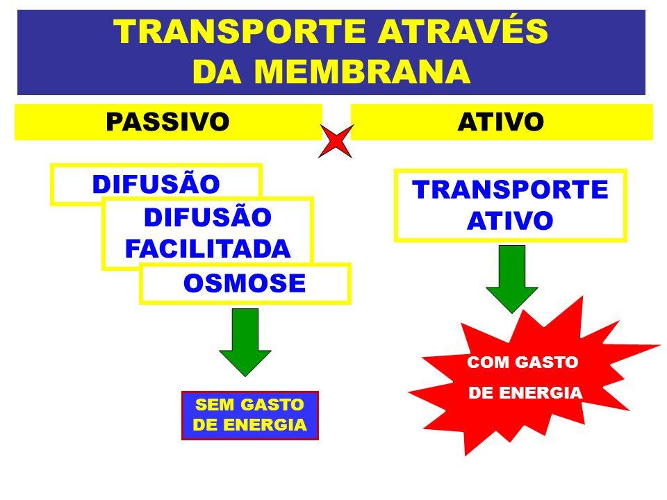 TRANSPORTE ATRAVÉS DA MEMBRANA PASSIVOATIVO DIFUSÃO FACILITADA SEM GASTO DE ENERGIA TRANSPORTE ATIVO COM GASTO DE ENERGIA OSMOSE