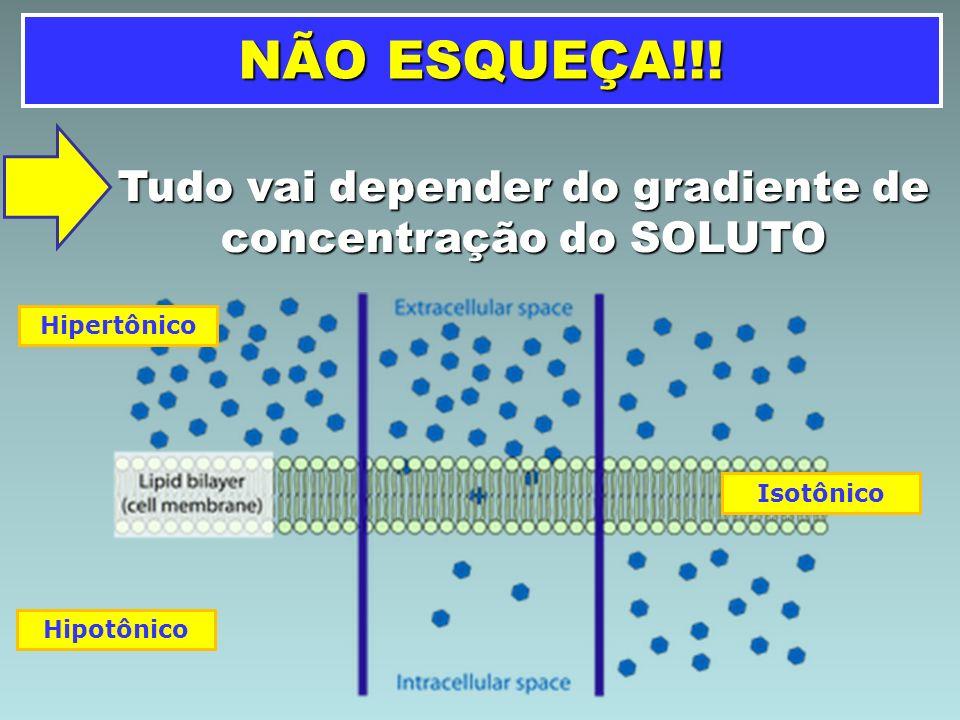 TRANSPORTE ATRAVÉS DA MEMBRANA DIFUSÃO DISPERSÃO DO SOLUTO DO MEIO MAIS CONCENTRADO PARA O MENOS CONCENTRADO.