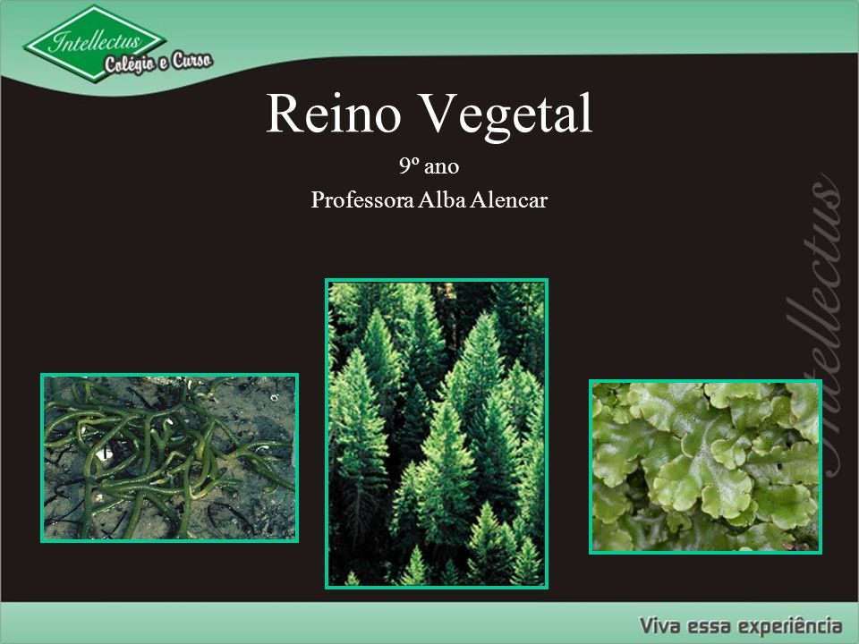 Reino Vegetal 9º ano Professora Alba Alencar