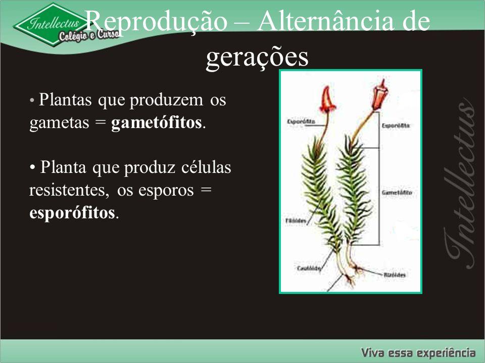 Reprodução – Alternância de gerações Plantas que produzem os gametas = gametófitos. Planta que produz células resistentes, os esporos = esporófitos.