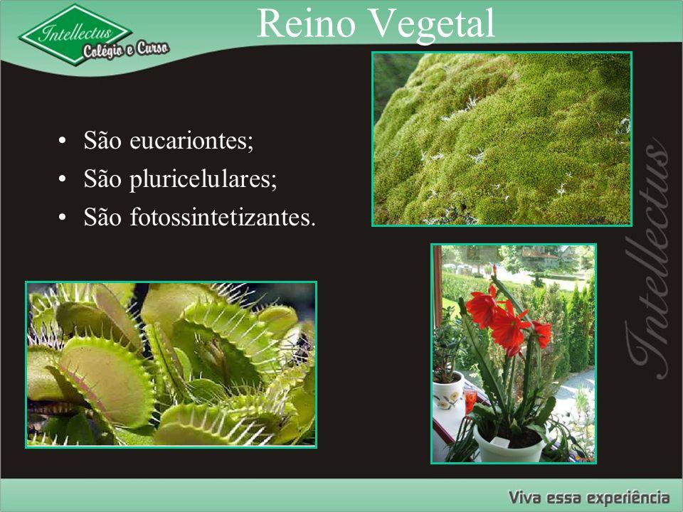 Reino Vegetal São eucariontes; São pluricelulares; São fotossintetizantes.