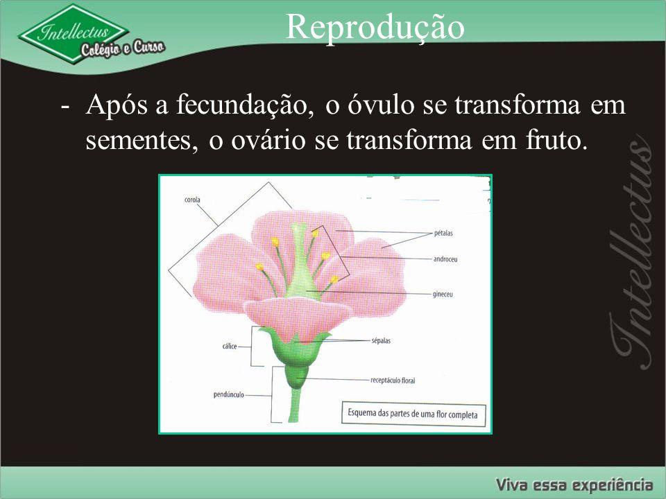 Reprodução -Após a fecundação, o óvulo se transforma em sementes, o ovário se transforma em fruto.