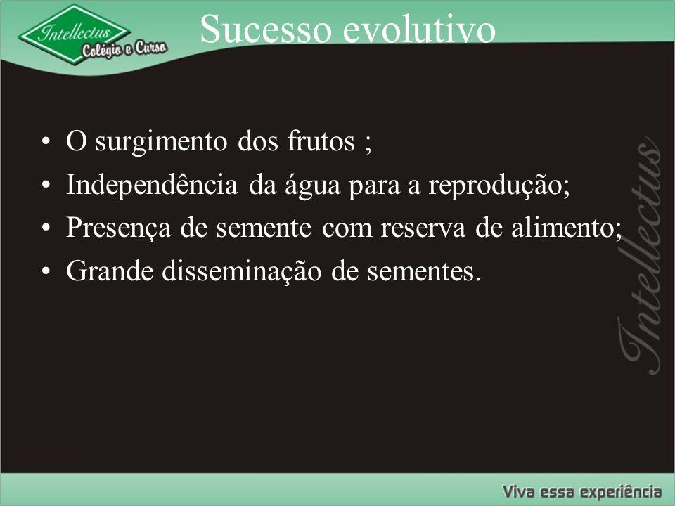 Sucesso evolutivo O surgimento dos frutos ; Independência da água para a reprodução; Presença de semente com reserva de alimento; Grande disseminação