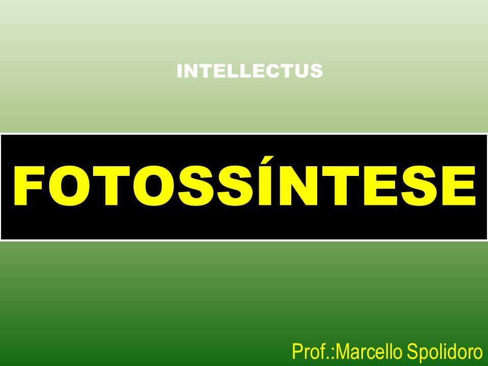 FOTOSSÍNTESE Prof.:Marcello Spolidoro INTELLECTUS