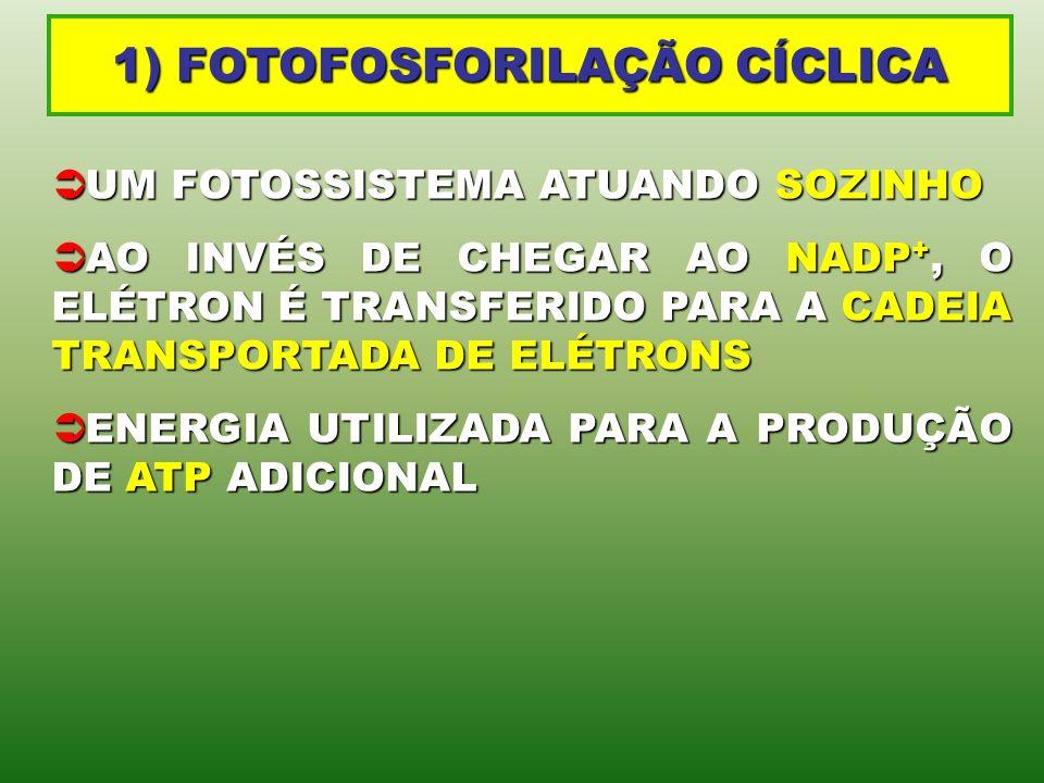 1) FOTOFOSFORILAÇÃO CÍCLICA UM FOTOSSISTEMA ATUANDO SOZINHO UM FOTOSSISTEMA ATUANDO SOZINHO AO INVÉS DE CHEGAR AO NADP +, O ELÉTRON É TRANSFERIDO PARA