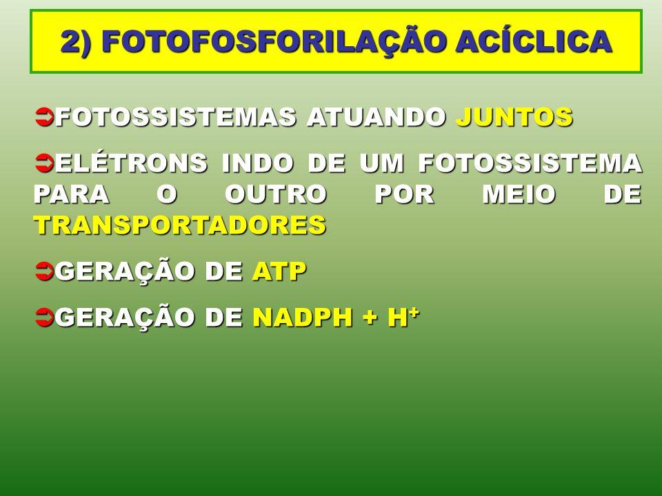 2) FOTOFOSFORILAÇÃO ACÍCLICA FOTOSSISTEMAS ATUANDO JUNTOS FOTOSSISTEMAS ATUANDO JUNTOS ELÉTRONS INDO DE UM FOTOSSISTEMA PARA O OUTRO POR MEIO DE TRANS