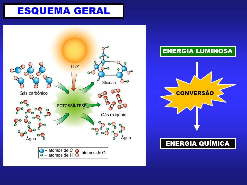 ESQUEMA GERAL ENERGIA LUMINOSA ENERGIA QUÍMICA CONVERSÃO