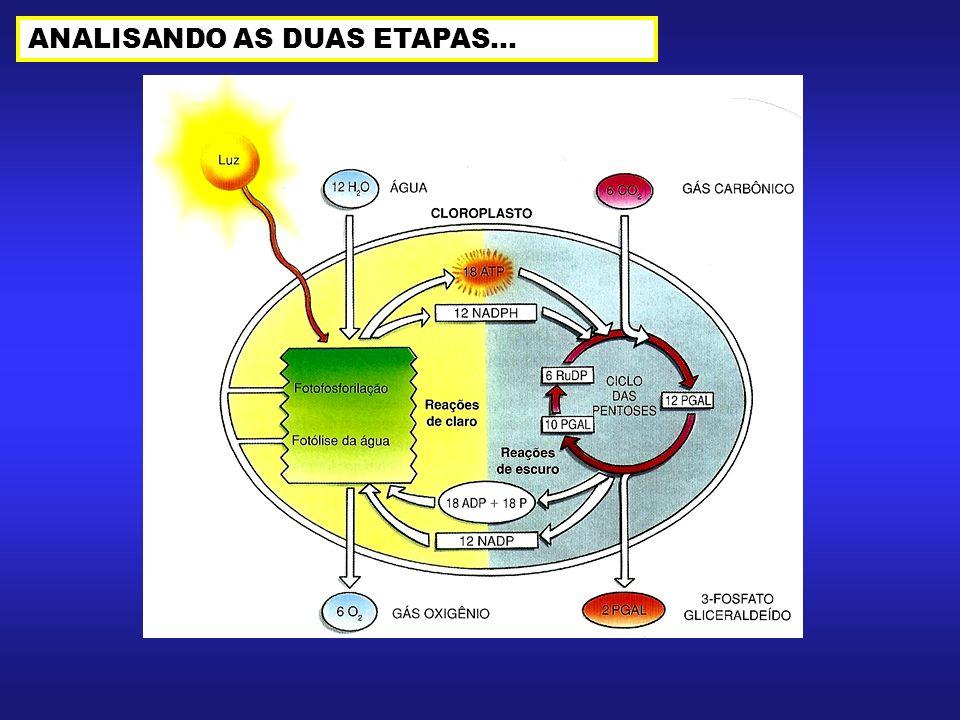 ANALISANDO AS DUAS ETAPAS...