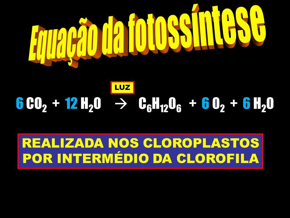 6 CO 2 + 12 H 2 0 C 6 H 12 0 6 + 6 0 2 + 6 H 2 0 REALIZADA NOS CLOROPLASTOS POR INTERMÉDIO DA CLOROFILA LUZ