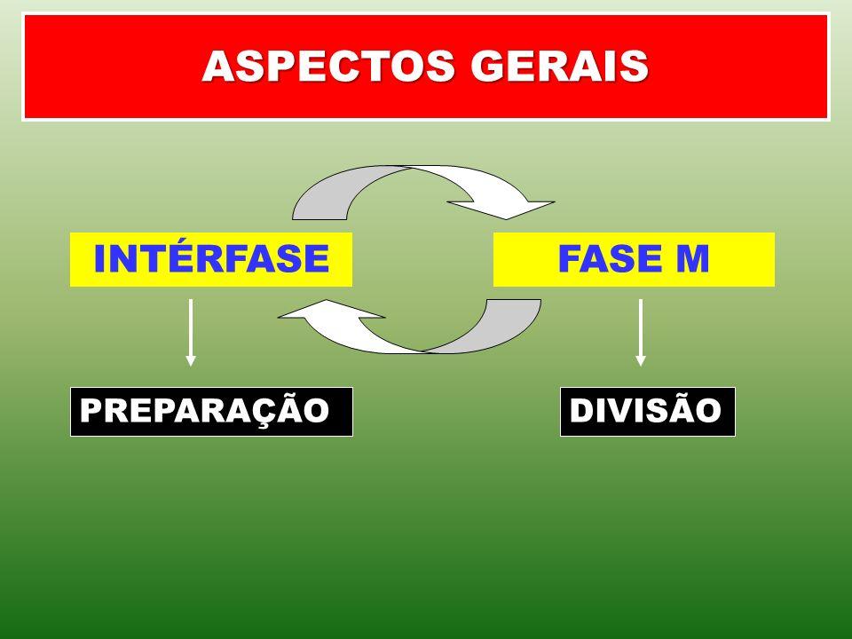 ASPECTOS GERAIS INTÉRFASEFASE M PREPARAÇÃODIVISÃO