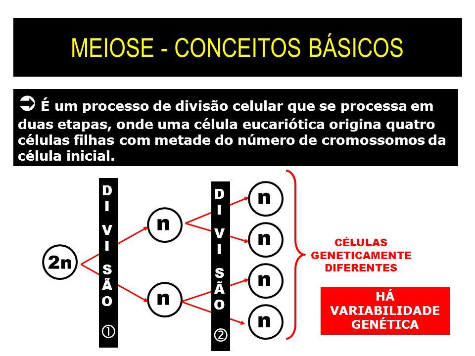 MEIOSE - CONCEITOS BÁSICOS É um processo de divisão celular que se processa em duas etapas, onde uma célula eucariótica origina quatro células filhas