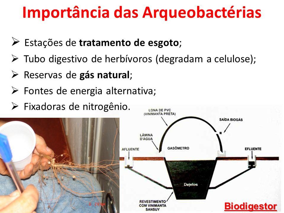 Importância das Arqueobactérias Estações de tratamento de esgoto; Tubo digestivo de herbívoros (degradam a celulose); Reservas de gás natural; Fontes