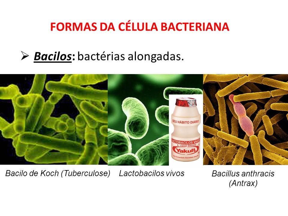 Bacilos: bactérias alongadas. FORMAS DA CÉLULA BACTERIANA Bacilo de Koch (Tuberculose) Bacillus anthracis (Antrax) Lactobacilos vivos