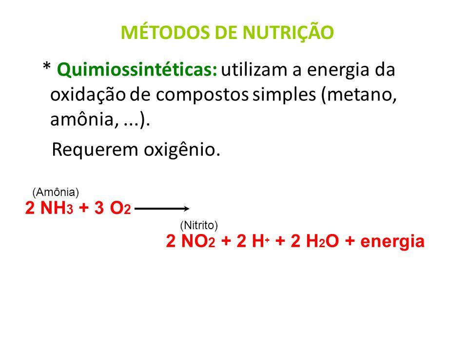 * Quimiossintéticas: utilizam a energia da oxidação de compostos simples (metano, amônia,...). Requerem oxigênio. 2 NH 3 + 3 O 2 2 NO 2 + 2 H + + 2 H