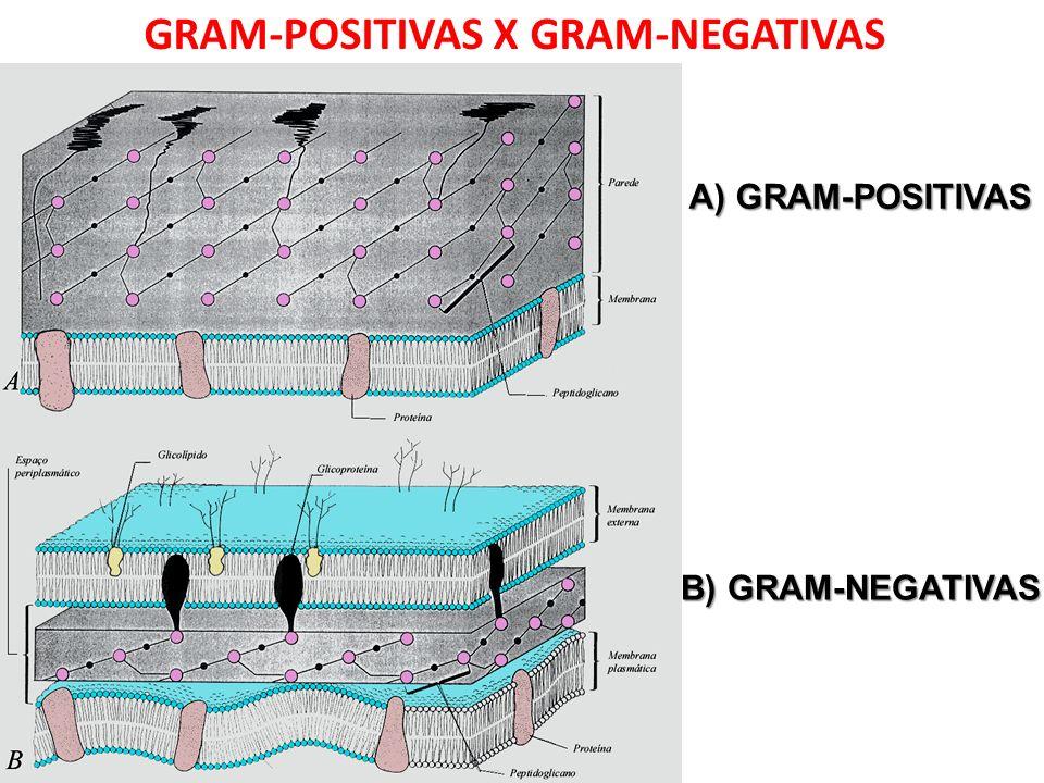 GRAM-POSITIVAS X GRAM-NEGATIVAS A) GRAM-POSITIVAS B) GRAM-NEGATIVAS
