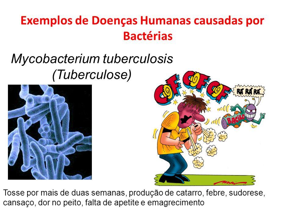 Exemplos de Doenças Humanas causadas por Bactérias Mycobacterium tuberculosis (Tuberculose) Tosse por mais de duas semanas, produção de catarro, febre