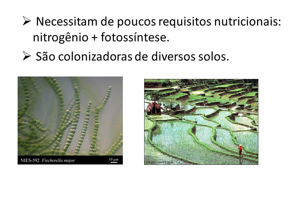 Necessitam de poucos requisitos nutricionais: nitrogênio + fotossíntese. São colonizadoras de diversos solos.