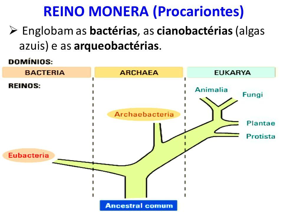 Englobam as bactérias, as cianobactérias (algas azuis) e as arqueobactérias. REINO MONERA (Procariontes)