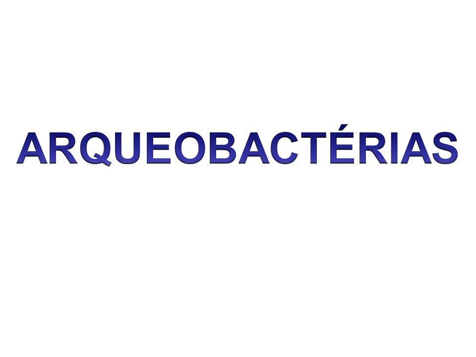 Cianobactérias (Cianofíceas) São conhecidas como algas azuis; Realizam fotossíntese utilizando a clorofila a; Algumas são fermentadoras e fixam nitrogênio.