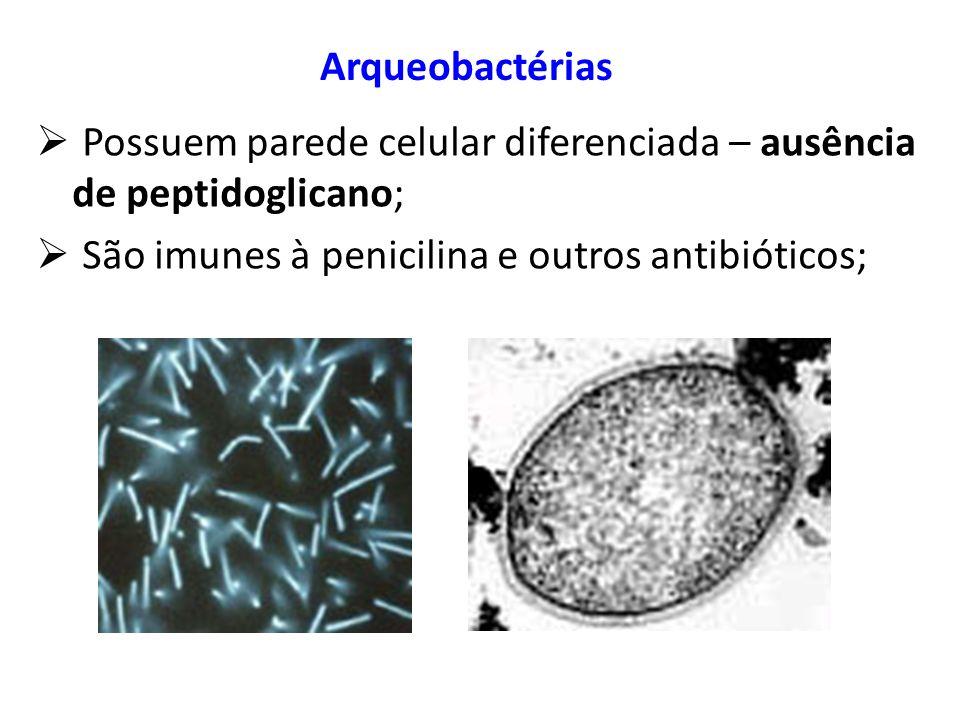 Arqueobactérias Possuem parede celular diferenciada – ausência de peptidoglicano; São imunes à penicilina e outros antibióticos;