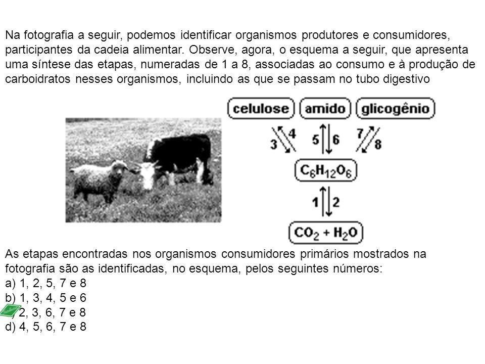Na fotografia a seguir, podemos identificar organismos produtores e consumidores, participantes da cadeia alimentar. Observe, agora, o esquema a segui