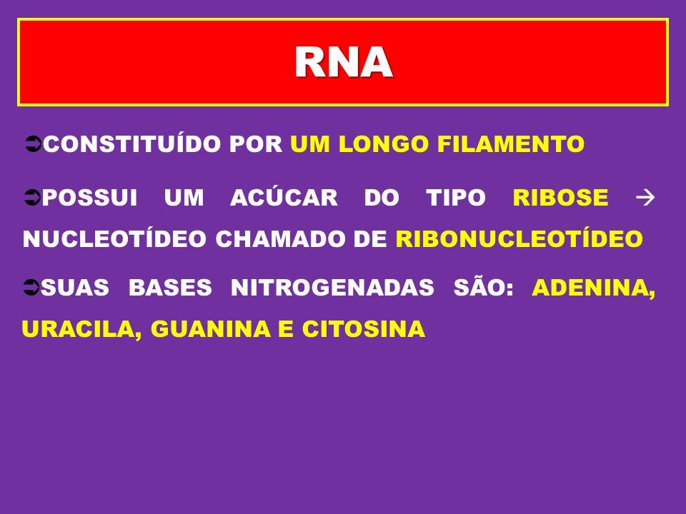 CONSTITUÍDO POR UM LONGO FILAMENTO POSSUI UM ACÚCAR DO TIPO RIBOSE NUCLEOTÍDEO CHAMADO DE RIBONUCLEOTÍDEO SUAS BASES NITROGENADAS SÃO: ADENINA, URACIL
