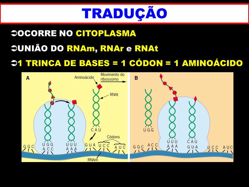 TRADUÇÃO OCORRE NO CITOPLASMA UNIÃO DO RNAm, RNAr e RNAt 1 TRINCA DE BASES = 1 CÓDON = 1 AMINOÁCIDO