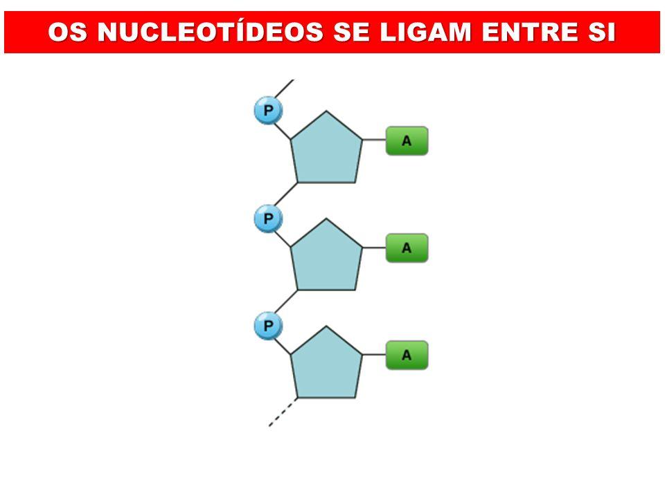 DNA POSSUI UM AÇUCAR (PENTOSE) DO TIPO DESOXIRRIBOSE NUCLEOTÍDEO CHAMADO DE DESOXIRRIBONUCLEOTÍDEO SUAS BASES NITROGENADAS SÃO: ADENINA, TIMINA, GUANINA E CITOSINA