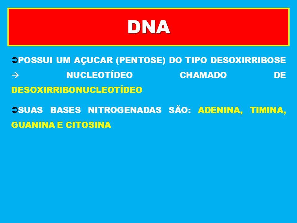 DNA POSSUI UM AÇUCAR (PENTOSE) DO TIPO DESOXIRRIBOSE NUCLEOTÍDEO CHAMADO DE DESOXIRRIBONUCLEOTÍDEO SUAS BASES NITROGENADAS SÃO: ADENINA, TIMINA, GUANI
