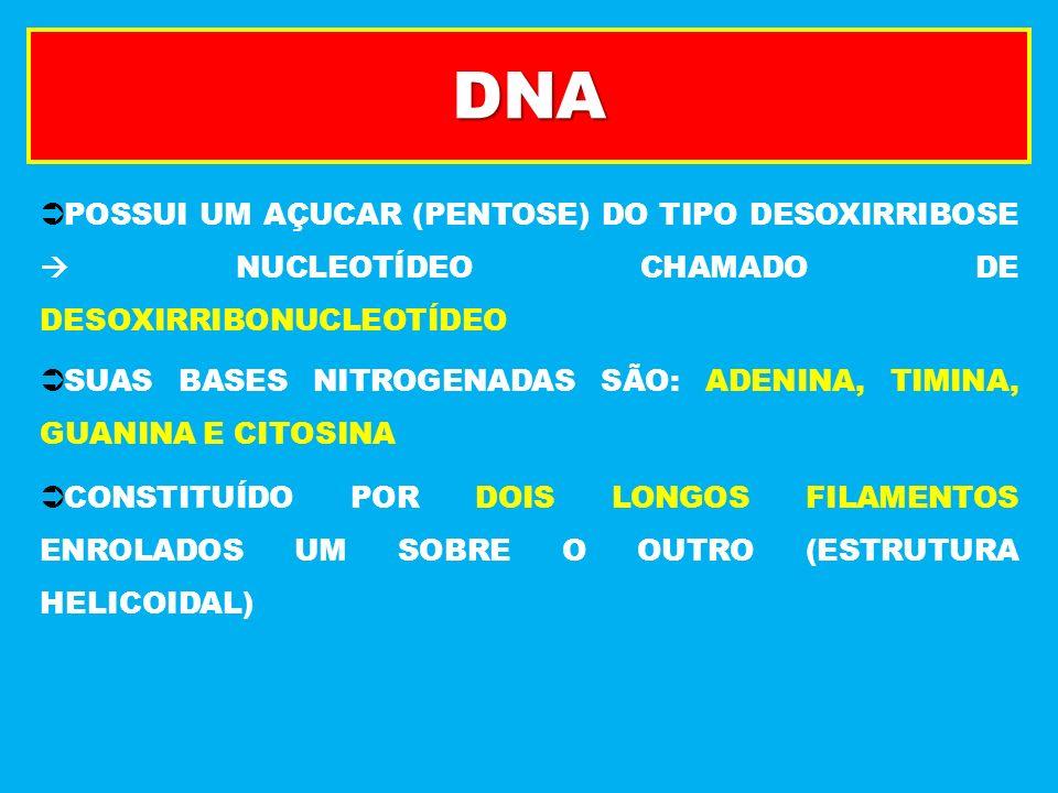DNA POLIMERASE