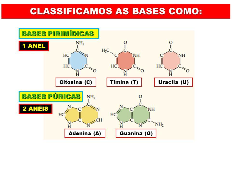 A = T C Ξ G SÃO COMPLEMENTARES