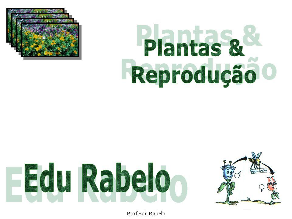 Relações filogenéticas Algas verdes (grupo externo) BriófitasPteridófitasGimnospermasAngiospermas Gametângios revestidos por células estéreis Embrião retido no gametângio feminino Vasos condutores de seiva Sementes Flores e frutos Espermatófitas (plantas que produzem sementes) Traqueófitas (plantas vasculares) Embriófitas Prof Edu Rabelo