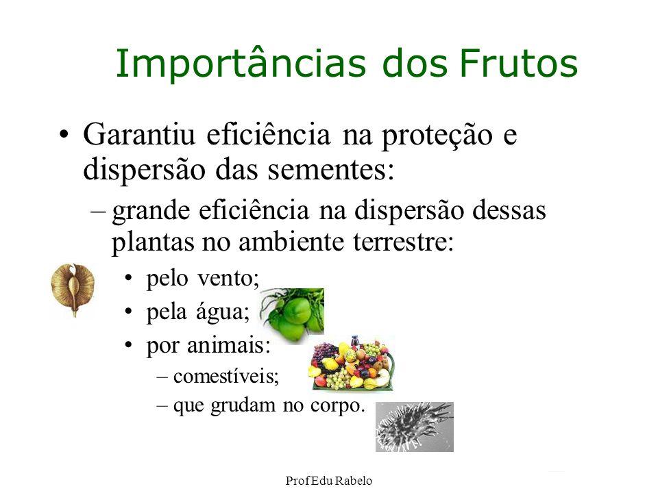 Importâncias dos Frutos Garantiu eficiência na proteção e dispersão das sementes: –grande eficiência na dispersão dessas plantas no ambiente terrestre
