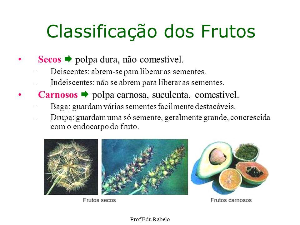 Classificação dos Frutos Secos polpa dura, não comestível. –Deiscentes: abrem-se para liberar as sementes. –Indeiscentes: não se abrem para liberar as