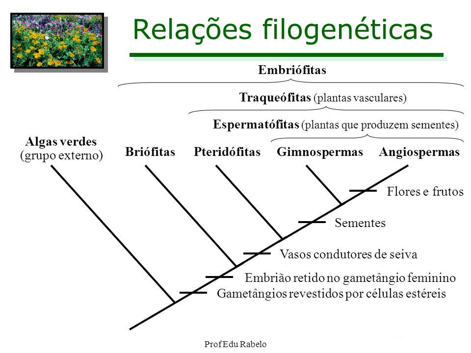 Análise Cromossômica na Reprodução SERES HAPLOBIONTES: Os genitores são Haplóides e formam gametas por mitose.