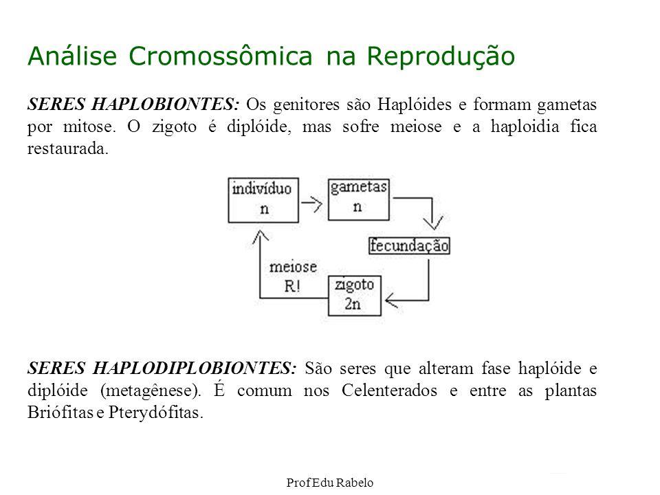 Análise Cromossômica na Reprodução SERES HAPLOBIONTES: Os genitores são Haplóides e formam gametas por mitose. O zigoto é diplóide, mas sofre meiose e