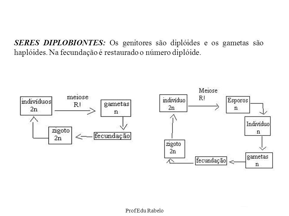 Ciclo de vida: Briófitas Cápsula (2n) Meiose no interior da cápsula, formando esporos (n) Esporos (n) eliminados da cápsula Gametófito masculino (n) Gametófito feminino (n) Esporófito (2n) Pé Haste Cápsula Anterídio (n) (gametângio masculino) Anterozóides (n) (gametas masculinos) Arquegônio (n) (gametângio feminino) Oosfera (n) (gameta feminino) Fecundação e divisão mitótica Arquegônio (n) com embrião (2n) Germinação Prof Edu Rabelo