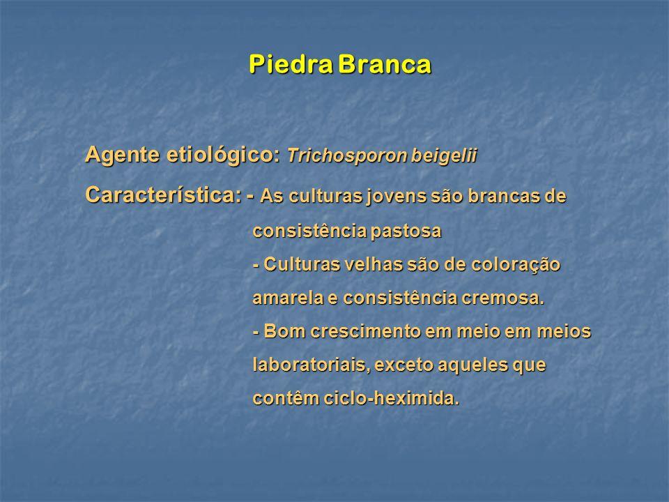 Piedra Branca Agente etiológico: Trichosporon beigelii Característica: - As culturas jovens são brancas de consistência pastosa consistência pastosa -